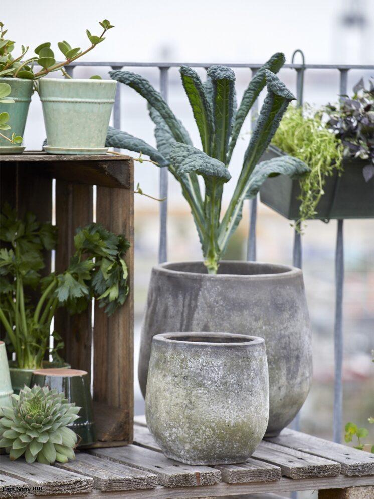 10109024-S2_B.Green Clay Pot Agnes