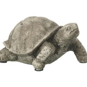 Tortoise Terrance