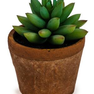 Ornamental Succulent in Terracotta Pot