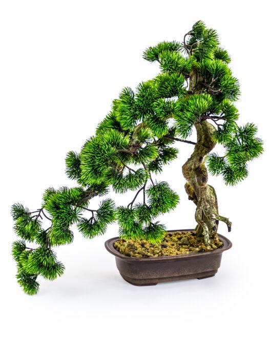 AF55 Ornamental Large Bonsai Tree in Iron Pot