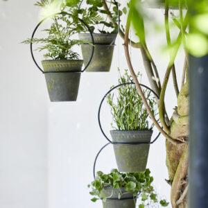 Hanging Garden Rings