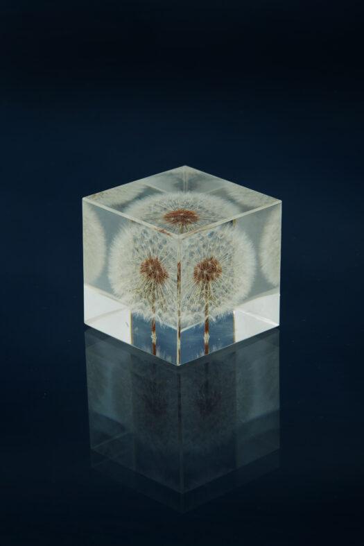 Dandelion set in acrylic glass GW111