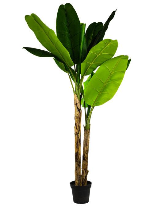 LARGE ORNAMENTAL BANANA TREE IN BLACK ITEM CODE- AF42