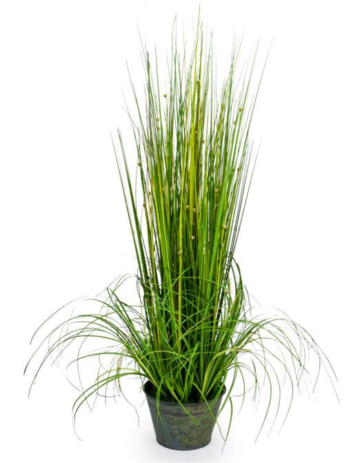 ORNAMENTAL GRASSES IN GALVANISED POT ITEM CODE- AF26