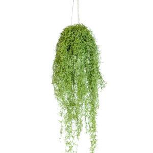 Ornamental Hanging Ball Airplant