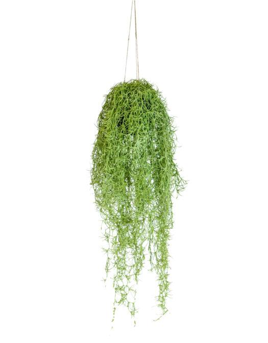 AF75 Ornamental Hanging Airplant Vine Arrangement