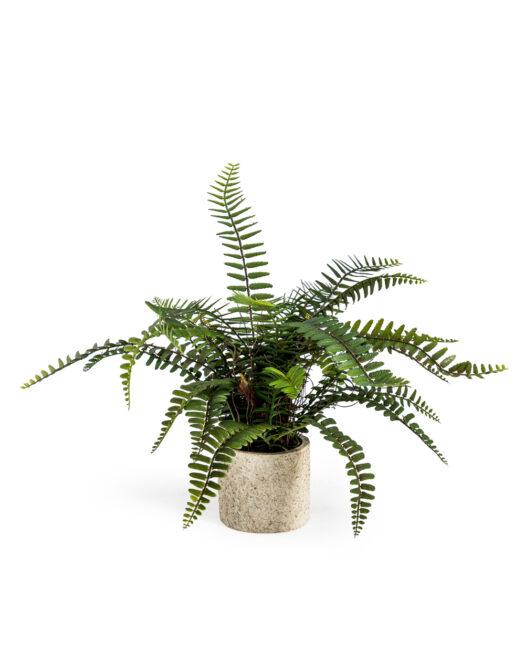 Ornamental Potted Fern Plant ORNAMENTAL POTTED FERN PLANT ITEM CODE- AF69