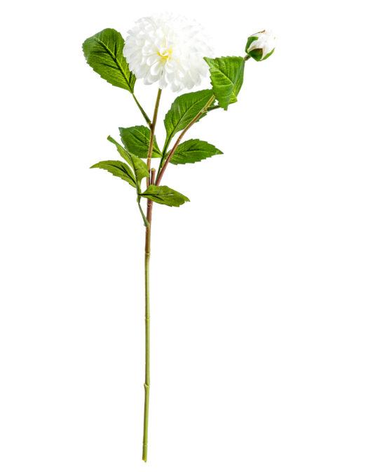 Single White Dahlia Stem