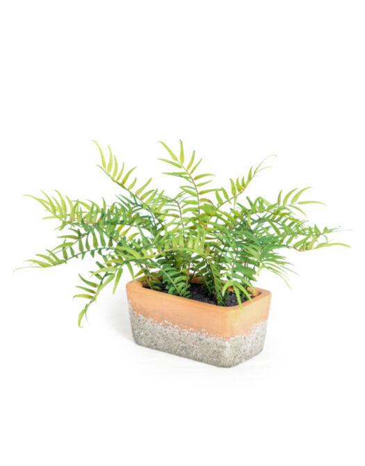 Ornamental Potted Fern Plant in Terracotta Pot